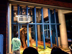 夏休み、福岡市動物園